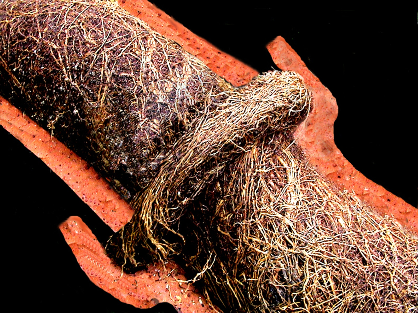 Tree Roots In Sewer Avoid A Sewer Repair Or Replacement