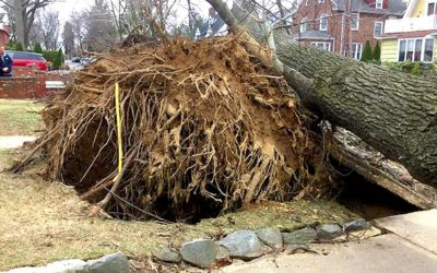Best Sewer Repair Near Me For Tree Roots In My Home Sewer Line