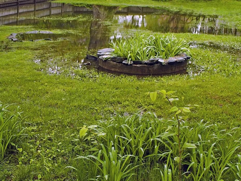 NYC Water Main Repair Water Pooling In Yard