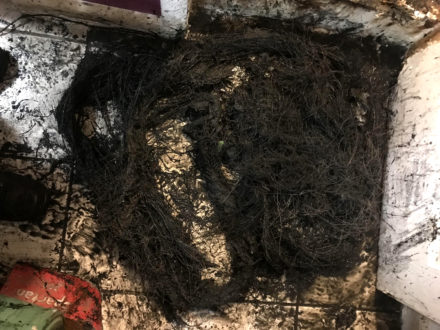 roots in sewer pipe