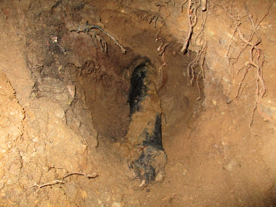 roots inside pipe